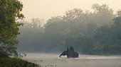 Elephant safari at dawn - Bardia Nepal