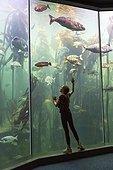 Girl looking at fish in an Aquarium - South Africa ; Two Oceans Aquarium