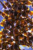 Orange clownfishes in aquarium - South Africa