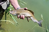 Presentation Grayling fly fishing - River Dessoubre France
