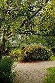 Bench and Blossom - Crarae Garden Scotland ; exotic Himalayan-style woodland garden