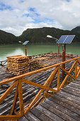 Cypress wood - Caleta Tortel Port Patagonia Chile