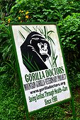 'Gorilla Doctors' - Bwindi Impenetrable National Park Uganda ; The impenetrable forest, world heritage site by the UNESCO, is home for 360 mountain gorillas, more than half of the total population.