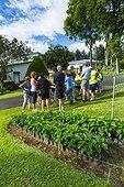 Coffee Plantation visiting - Alajuela Costa Rica