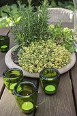 Aromatic plants in pot on a table garden