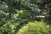 Jardin d'Angélique ; Little bridge in a garden surronding by Hostas, Hakonechloea, Phlox paniculata, Rodgersia, Hydrangea