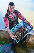 Oyster farmer and oysters of Marennes d'Oleron - France ; Bernard Montauzier, oyster farmer,