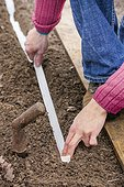 Sowing seeds on ribbon in a kitchen garden