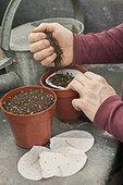 Sowing of pre-sowed seeds