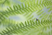 Insect on fern frond - France