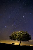 Holly oak at night - Valley of Alcudia Spain