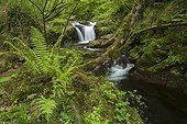 Cascade in Redes Natural Park - Asturias Spain ; Infierno River
