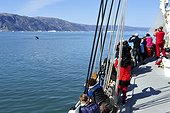 Denmark. Greenland. West coast. Passengers of a cruise boat looking at a whale in the straight of Ata Sund.