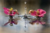 Curious snails - two snails watching a falling waterdrop