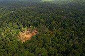 Paysage de déforestation - Forêt de Guyane française - Parc amazonien de Guyane