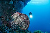 Coral reef, geant sponge covered with sea worms, Cebu Island, Philippines