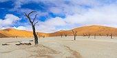 Dead Acacia erioloba in Deadvlei, Namib-Naukluft National Park, Namibia, Africa