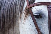 Horse, Horse riding, Sierra de Gredos, Avila, Castilla y León, Spain, Europe
