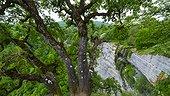 Gujuli waterfall, Gorbeia Natural Park, Alava, Basque Country, Spain, Europe