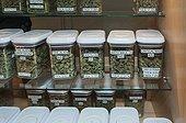 Marijuana hybrid flowers on sale at marijuana dispensary. Denver, CO