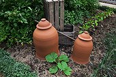 Kew Gardens. Pots bleach rhubarb