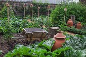 Kew Gardens. Rhubarb pots bleach rhubarb and wooden wheelbarrow