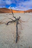 Deadvlei, Sossusvlei Salt Pan, Namib Naukluft National Park, Namibia, Africa