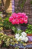Outdoor spring table, peonies, Lady Banks' rose, guelder-rose, Provence, France