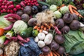 Vegetable mix with leeks , carrots, cucumbers , cabbage, radishes , beets , eggplant, salads.