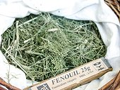 Dry plant (Foeniculum vulgaris) for infusion with its name in a basket
