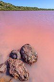 Pink Lake Region Kalbarri (Port Gregory), Western Australia. The pink color is related to the combined presence of algae : Dunalella sailina and a cyanobacterium : Haloarchaea cutirubrum that mass produce protective pigments against UV
