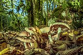 Mushrooms in a forest of Hornbeam, Bugey , Ain, France