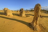 The Pinnacles , Nambung National Park , Western Australia, calcareous concretions formed from logs and tree stumps transformed gradually in mineral, and estimated at 30,000 years of service in a more humid environment than today. The wind cleared and eroded these columns form a spectacular ensemble on several km².