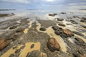 Stromatolites à marée basse - Hamelin Pool - Shark Bay - Australie Occidentale