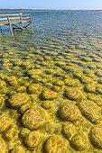 Thrombolites de Clifton Lake - Australie Occidentale