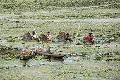 India, Assam, Guwabati district, Deepor Beel Wildlife sancturay, fishermen