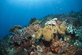 Volcanic Gas Bubbles in Coral Reef, Ambon, Moluccas, Indonesia