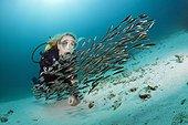 Diver and Striped Eel Catfish, Plotosus lineatus, Ambon, Moluccas, Indonesia