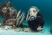 Diver and Shoal of Razorfish, Aeoliscus strigatus, Ambon, Moluccas, Indonesia