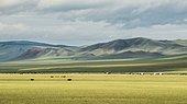 Breeders in the Mongolian steppe, Valley High Tamer - Site Tsatsyn Ereg - Mongolia