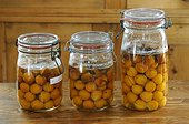 Preserving jars of plums on kitchen table, Fruit of Mirabellier (Prunus domestica syriaca ) , Lorraine, France