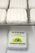 Raw milk cheese Le P'tit René , Cave refining, Cheese Cooperative Plateau of Bouclans, Haut-Doubs, Franche-Comté, France