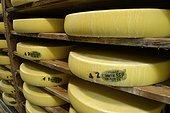 Cheese wheels on shelves spruce, Comté cave refining, Cheese Cooperative Plateau of Bouclans, Haut-Doubs, Franche-Comté, France