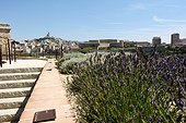Garden of Fragrance in the Garden of Migration, Fort St. John Villa Mediterranean MuCEM Museum of Civilization in Europe and the Mediterranean , Cathedral of Our Lady of the Guard in the background, Marseille, Provence, France