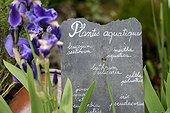 Aquatic plants, Iris and slate, Herbarium : medieval garden , Saint-Valery-sur-Somme , Picardy, France
