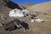 Nomad camp, Changthang Plateau, Ladakh, Himalayas, India