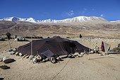 Nomad camp, Surroundings of Korzok, Leh, Ladakh, Himalaya, India