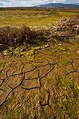 Dry lagoon in winter in Delta de l'Ebre Natural Park. Lagoon with salicornia (Arthrocnemum sp., Salicornia sp.) and seaweeds. Montsia. Tarragona. Catalunya. Spain.