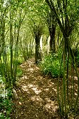Bamboos attached in a garden