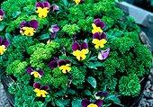 Flowers in pot in summer